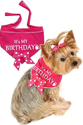 """I See Spot """"It's My Birthday"""" Scarf, Large"""